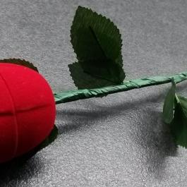 Krabička sametová růže